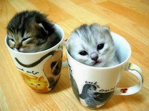 نتيجه الخيانه Funny-cats