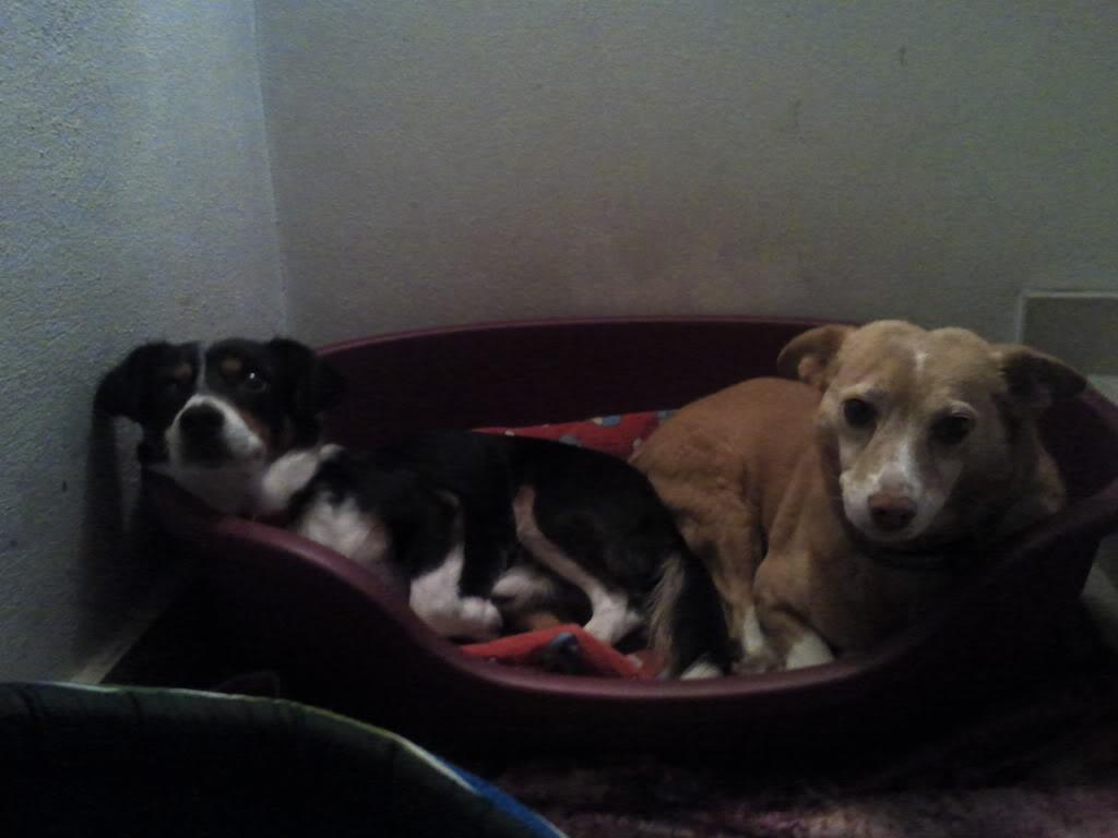 Os nossos animais de estimaçao!!! - Página 7 2011-04-21221505