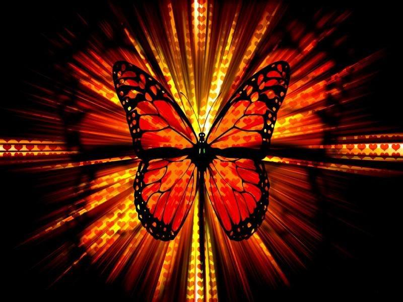 Associação Internacional de Proteção ás Borboletas do Afeganistão Butterfly-wallpaper-1600