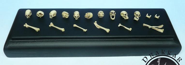 Réunion au sommet (pirates 17ème siècle). Skull-75mm-skulls-70mm-scale-1-20-1-24-bones-resin-11_zpsauzhcsaz