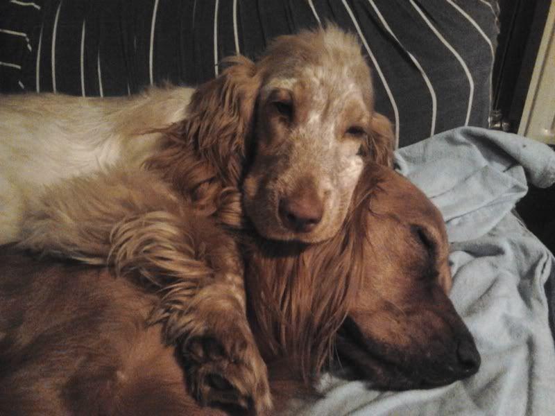 Posture originale pour dormir....et chez vous c'est comment??? - Page 3 2011-12-19194535