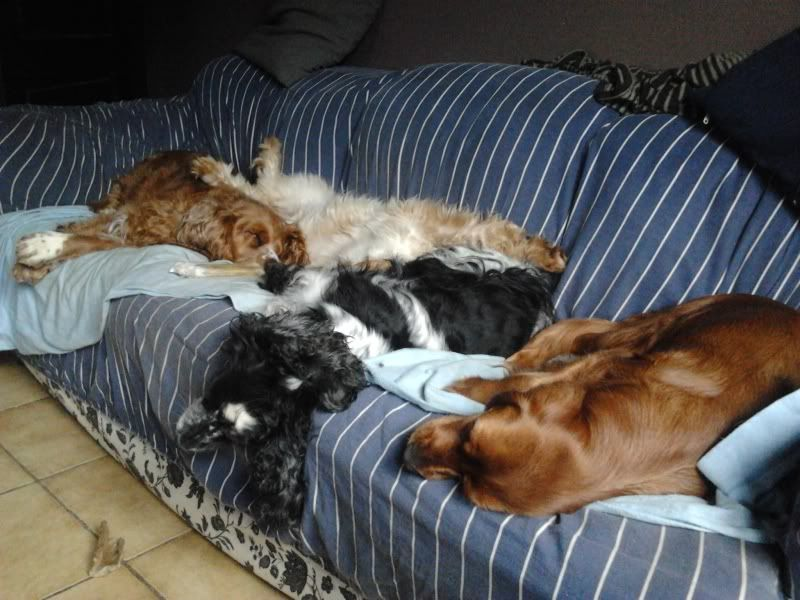 Posture originale pour dormir....et chez vous c'est comment??? - Page 3 2011-12-27135011