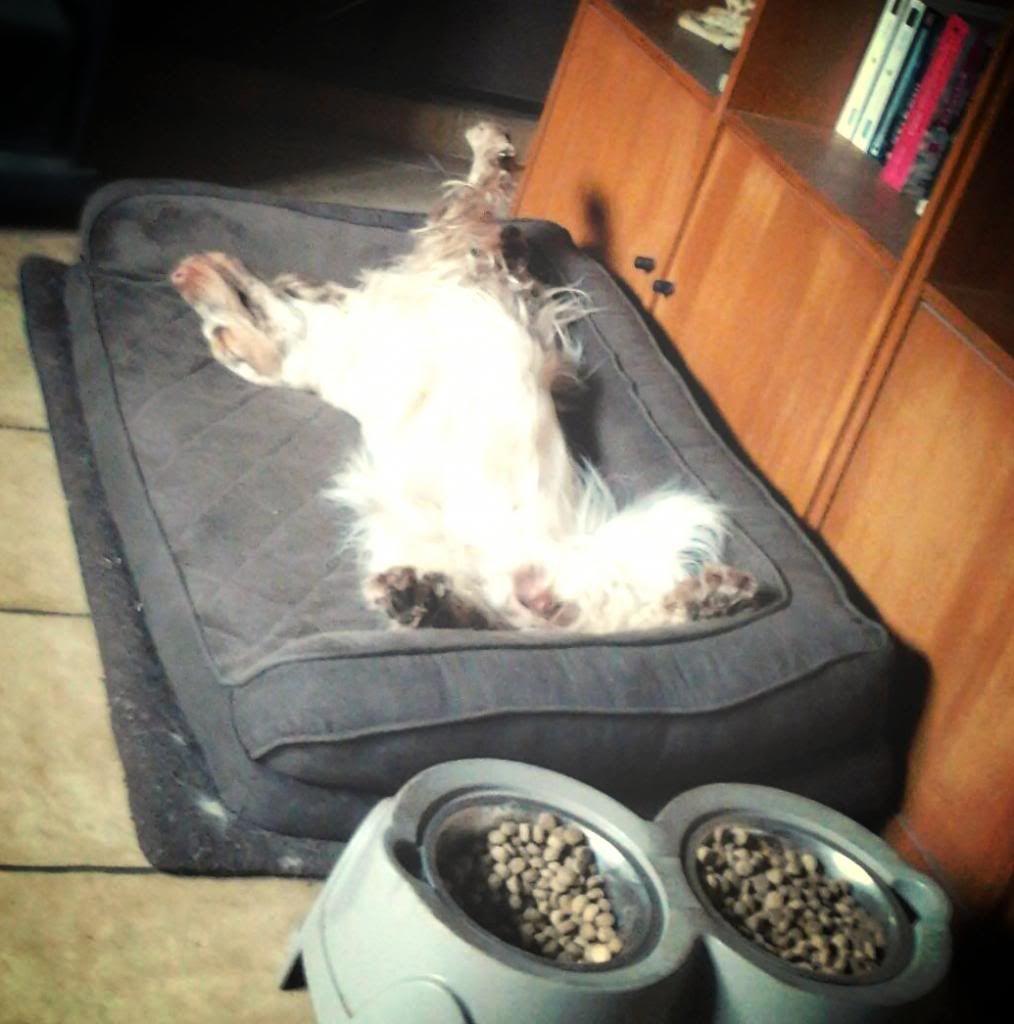 Posture originale pour dormir....et chez vous c'est comment??? - Page 3 A4444e73-385a-4bf3-b2c3-948d98cb3b98_zpsaf8a027a