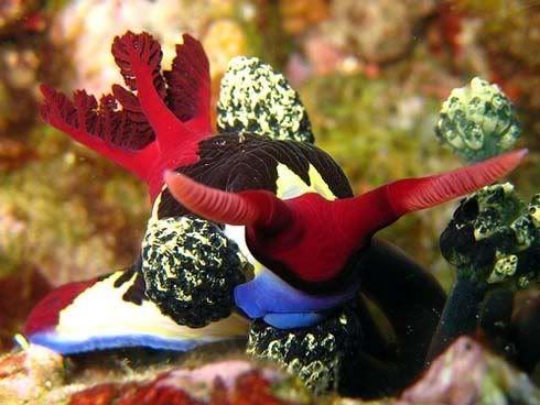 Uno de los animales mas coloridos del mundo. 20514188615932e6b382li1