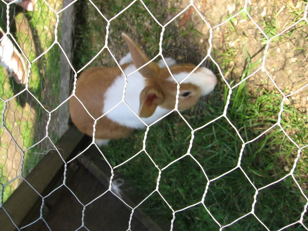 My pets! IMG_4198