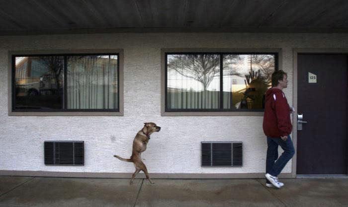 Voluntad de perros (historia en fotos) ATT00138