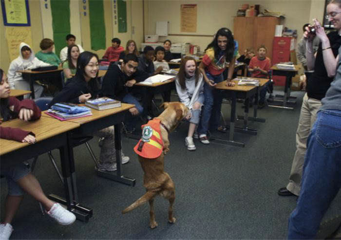 Voluntad de perros (historia en fotos) ATT00141