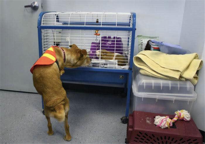 Voluntad de perros (historia en fotos) ATT00144