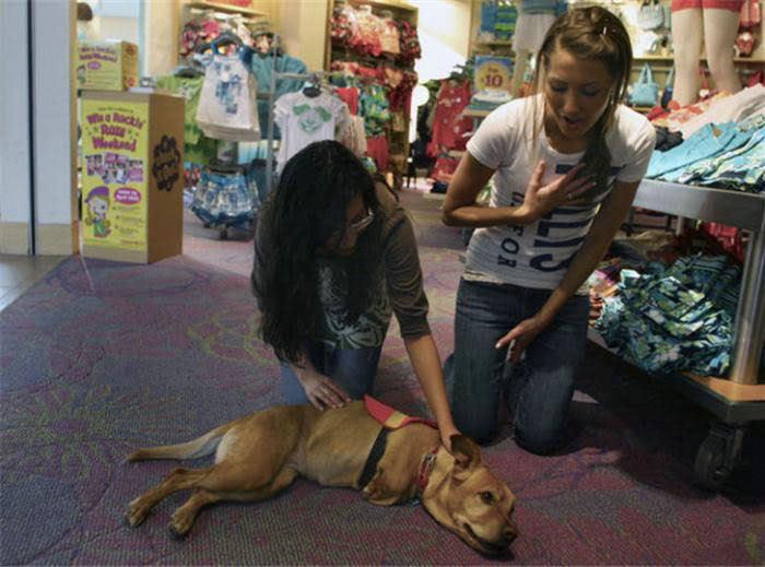 Voluntad de perros (historia en fotos) ATT00147