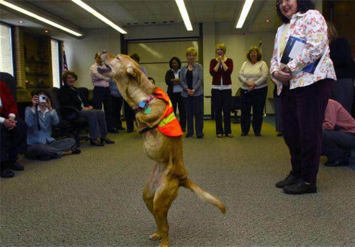 Voluntad de perros (historia en fotos) ATT00150