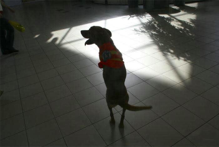 Voluntad de perros (historia en fotos) ATT00153