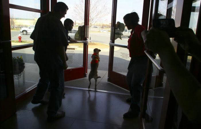 Voluntad de perros (historia en fotos) ATT00156