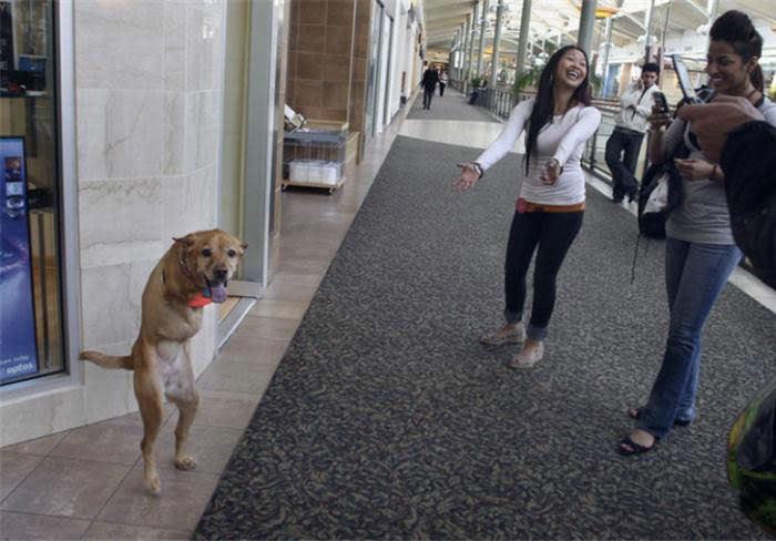 Voluntad de perros (historia en fotos) ATT00159