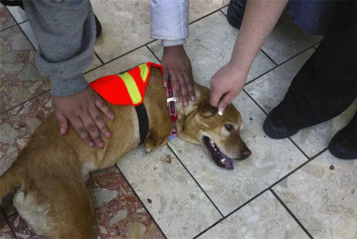 Voluntad de perros (historia en fotos) ATT00162