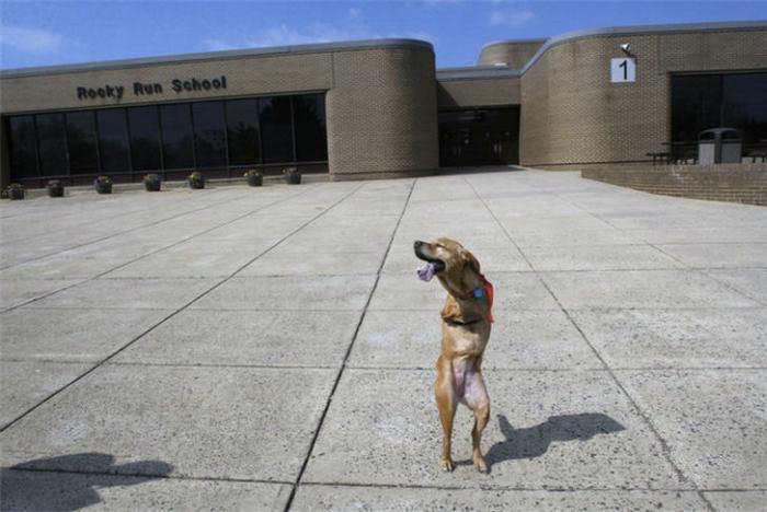 Voluntad de perros (historia en fotos) ATT00165