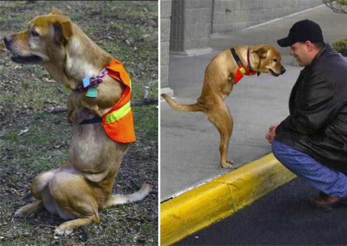 Voluntad de perros (historia en fotos) ATT00168