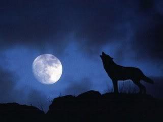 Sobre influencia lunar; lunáticos y mito de los lobizones u hombres lobo Loboaullandoalaluna1
