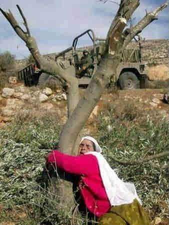اجمل الصور الفلسطينية 4bc0bd44