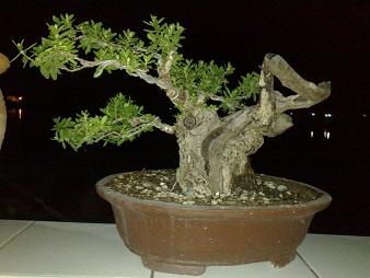 The Fairy Tale Bonsai Style Qwqw121212_zps87305cc5
