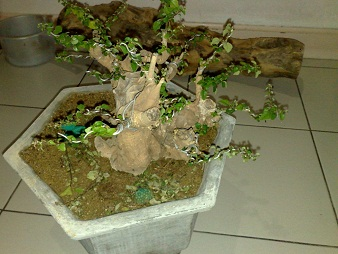 The Fairy Tale Bonsai Style Qwqwqwqwq_zps1b1be4f6