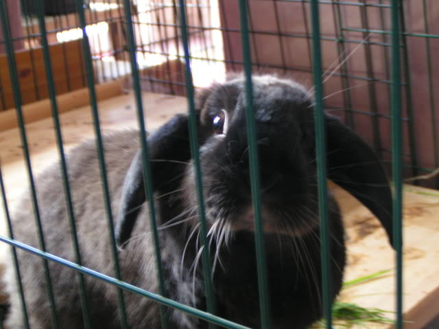 Forum Members Rabbits - Page 3 PICT2152