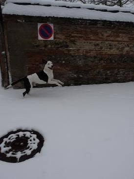 SOS pour le chien Ritoun P1020569
