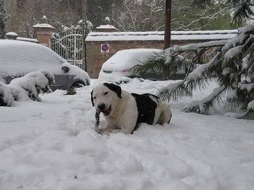 SOS pour le chien Ritoun P1020585