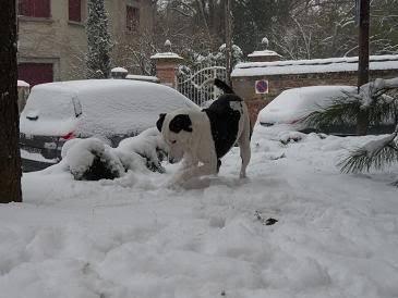 SOS pour le chien Ritoun P1020590