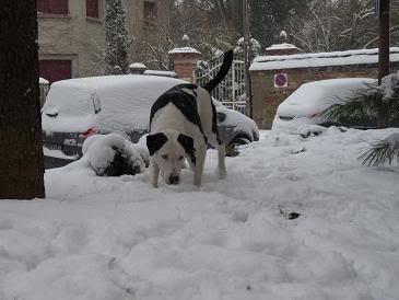 SOS pour le chien Ritoun P1020591