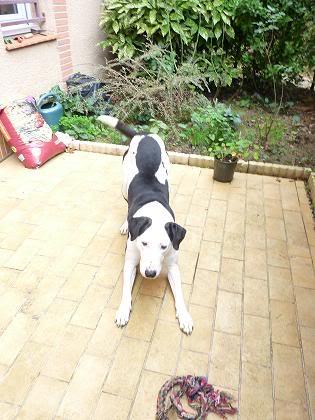 SOS pour le chien Ritoun Dbsakjf