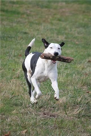 SOS pour le chien Ritoun Dfgvqsd
