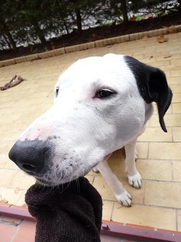 SOS pour le chien Ritoun Dfsqsdf