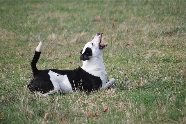 SOS pour le chien Ritoun Fdgqerg