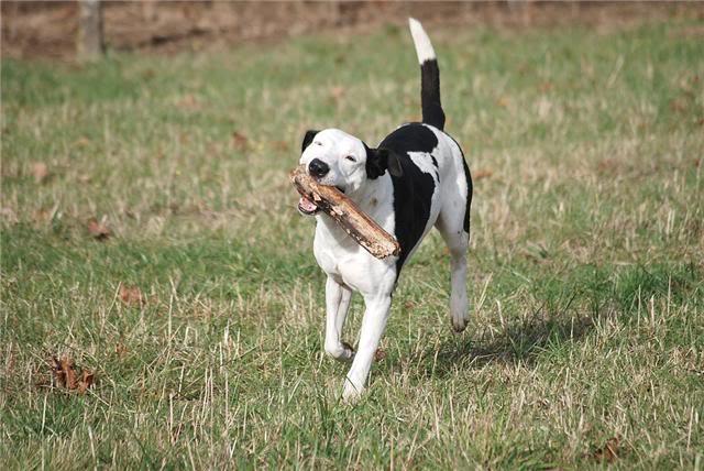 SOS pour le chien Ritoun Fdvqgd