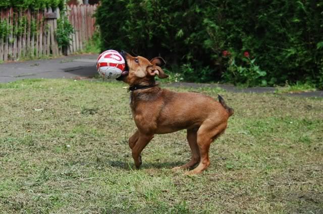 Darwin 4-5 mth old GSD x pup Darwin3