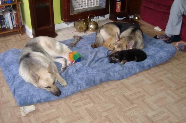LCGSD Calendar - Jul 2009 Theme - Lazy Dog(s) 2006_0629zeus20002