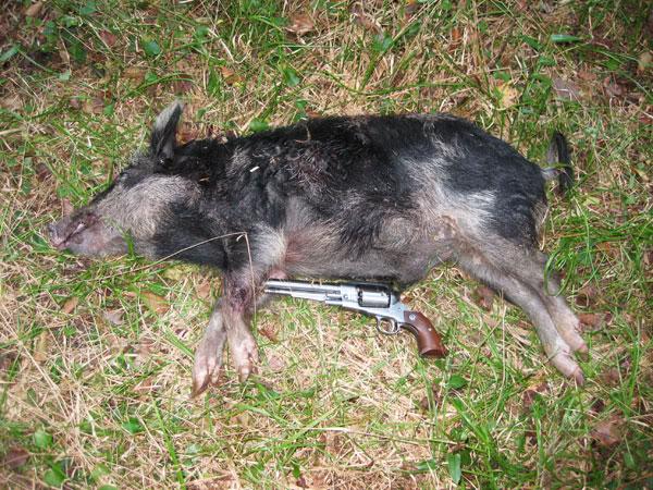 ...Hog hunt is set ............ IMG_0406web