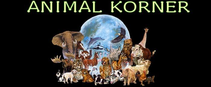 Animal Korner