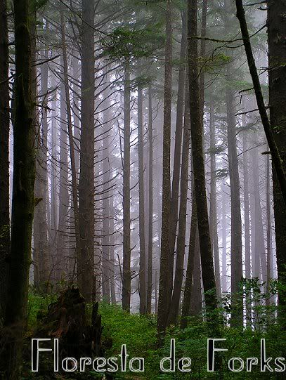 Floresta Florestaforks