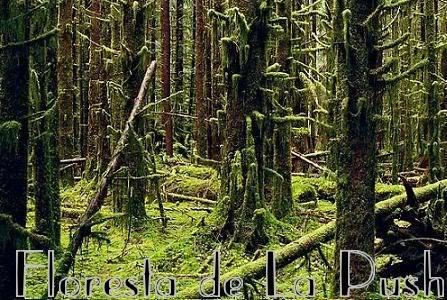Floresta Olym25078