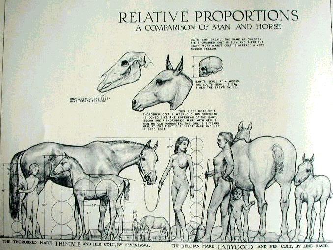Pap Elefante africano. Horse_anatomy03