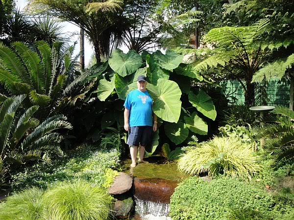 How Big Do Plants Grow in a Koi Pond DSC00707
