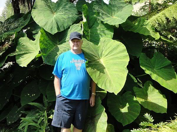 How Big Do Plants Grow in a Koi Pond DSC00709