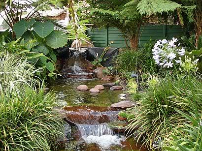 How Big Do Plants Grow in a Koi Pond Gradenpicsnov05069