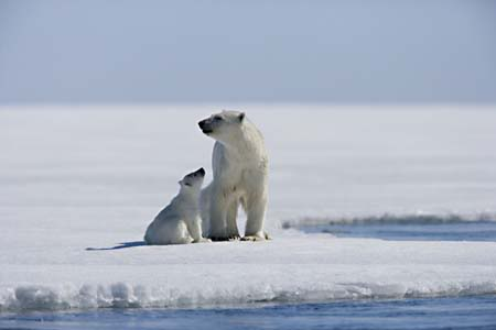 Première mosquée au Pôle Nord. Arctic