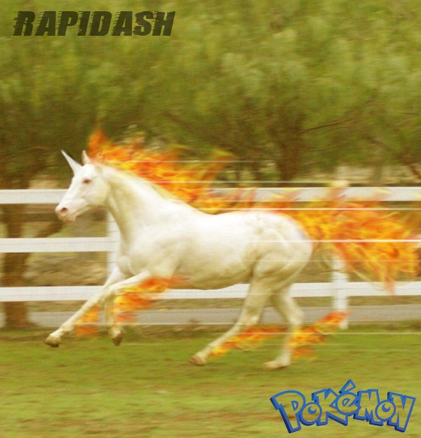 My POKEMON Creations Rapidash1