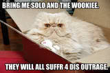 Funny Piccies - Page 3 ThFunnyCat