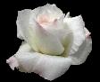 Fallecimiento del hijo de Gala Grosso ROSB1