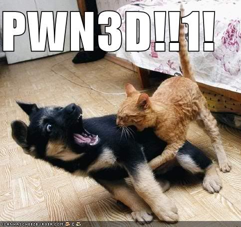 Post LOLcats here - Page 2 Funny-pictures-cat-pwns-dog
