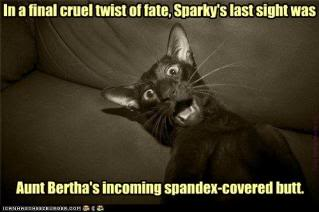 Orc deities Funny-pictures-cat-sees-a-spandex-c